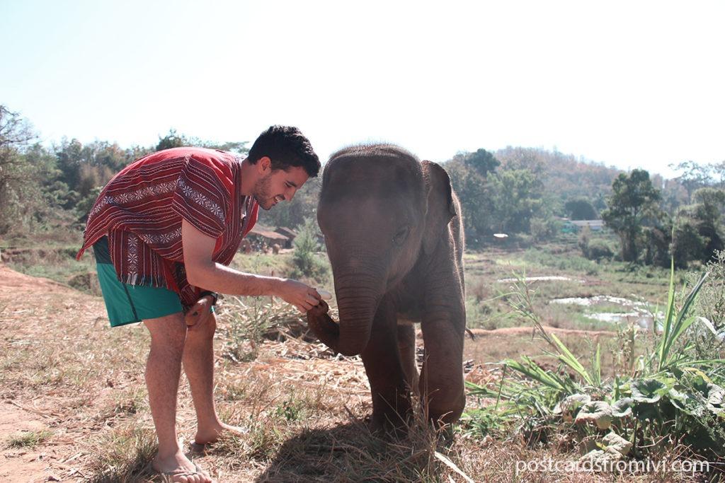 Elephant Jungle Sunctuary Chiang Mai