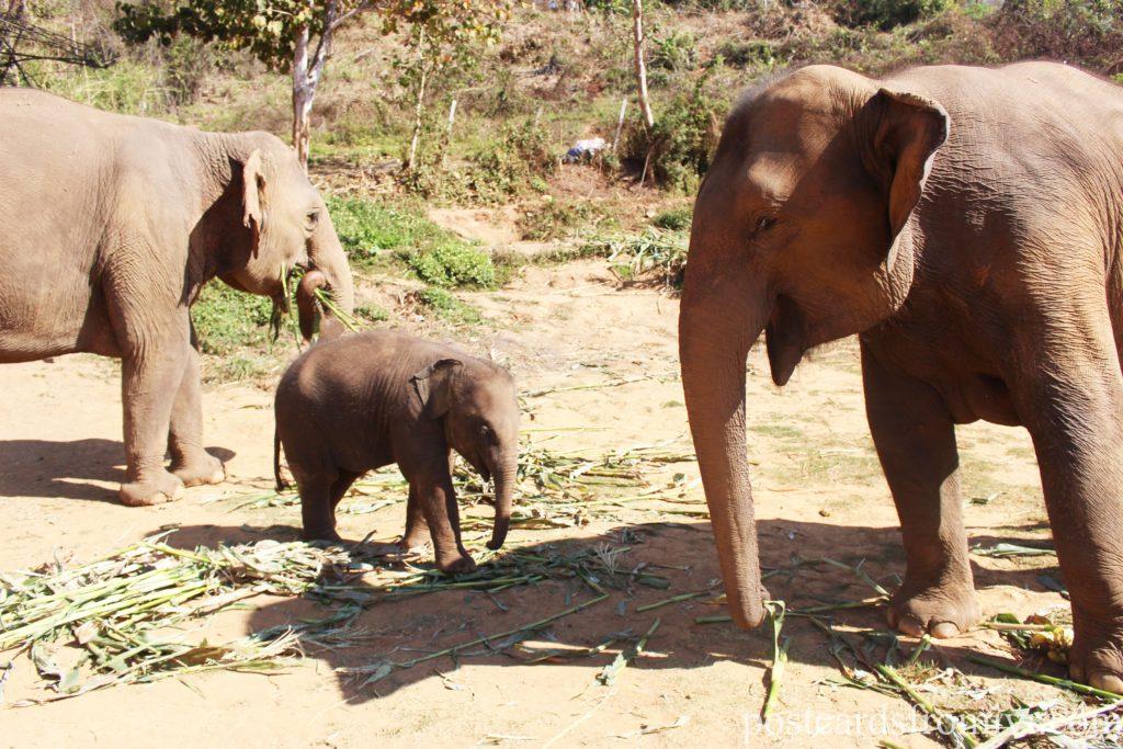 See elephants in Thailand - Elephant Jungle Sanctuary Chiang Mai